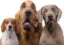Anxious dogs